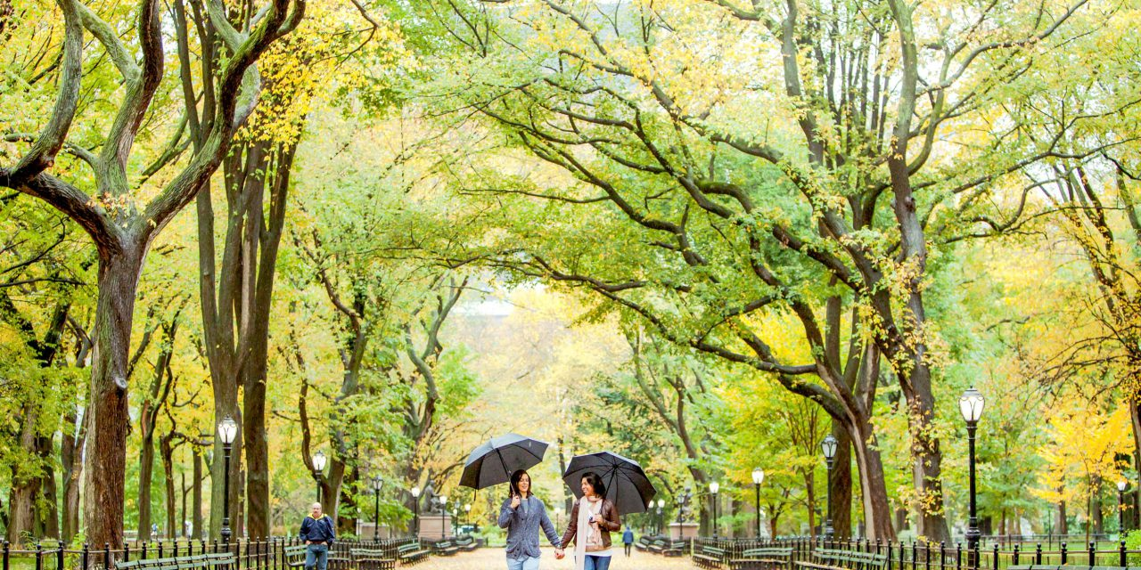 A Central Park Proposal One Year in the Making